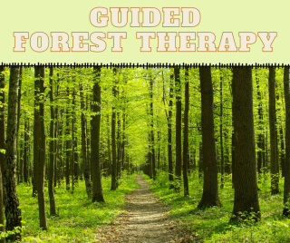 Guided Forest Therapy
